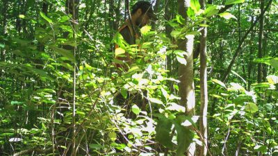 Lenore Fahrig's student Joe Gabriel is somewhat camouflaged as he surveys plants and trees.